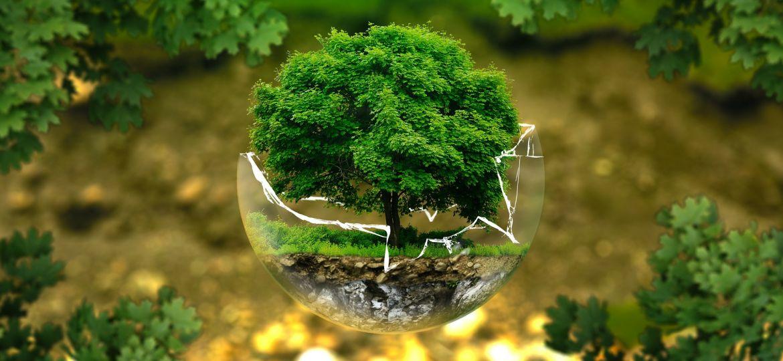imbottiture funebri biodegradabili